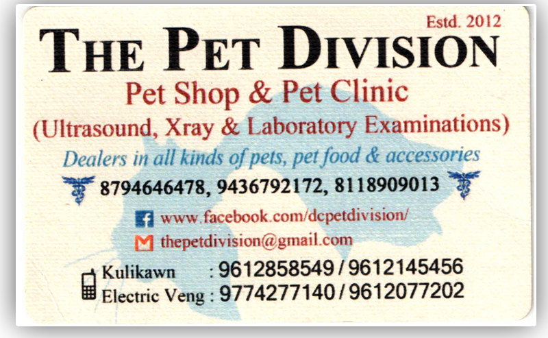 THE PET DIVISION